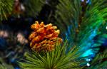 christmas tree fir cone