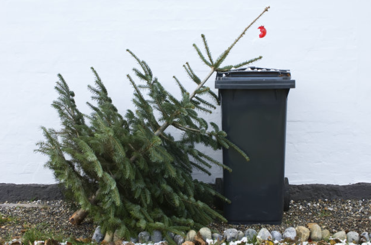 Recycle Your Christmas Tree In Croydon – 2016 Details