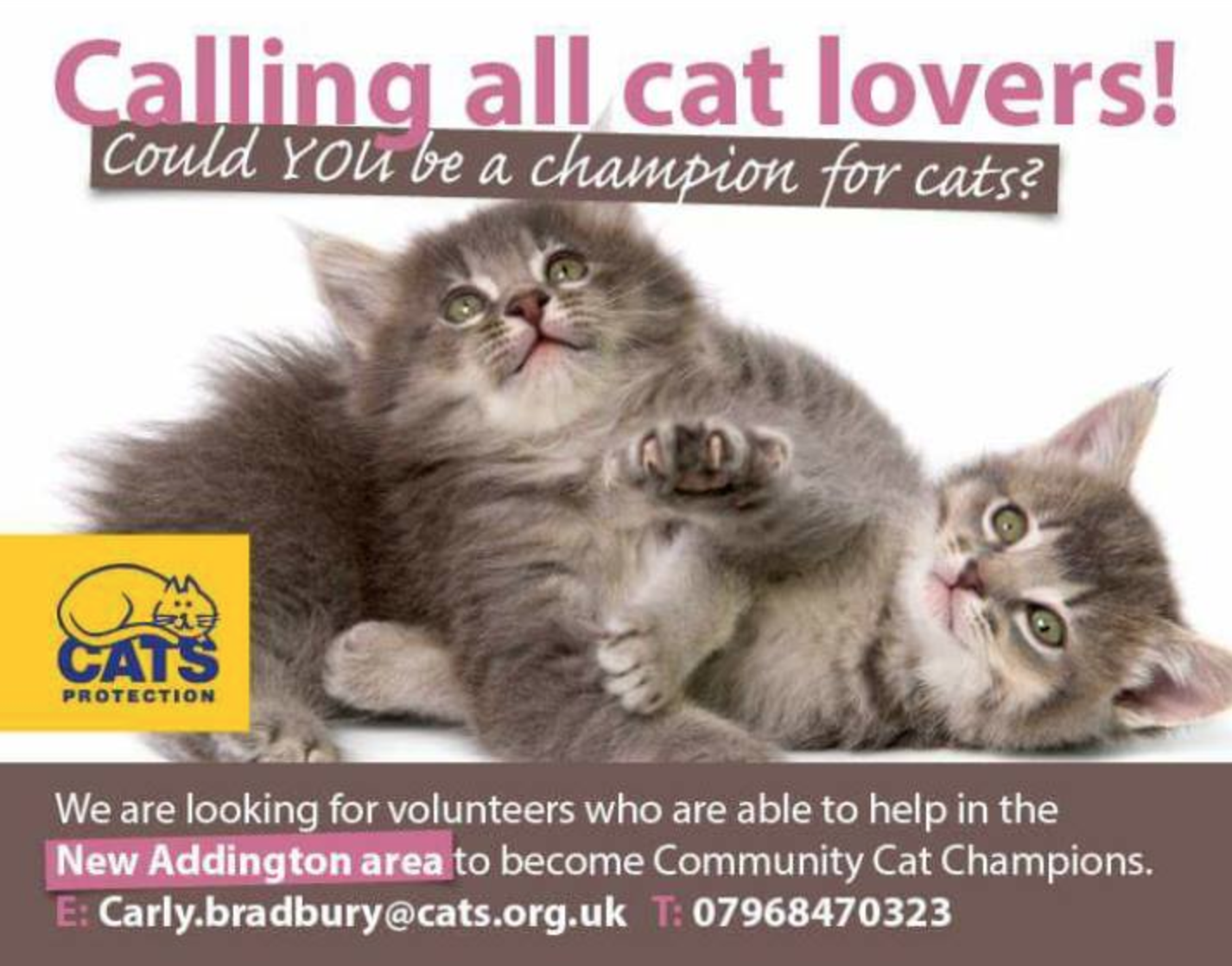 Cats Protection Need Volunteers To Door Knock Now To Promote Their